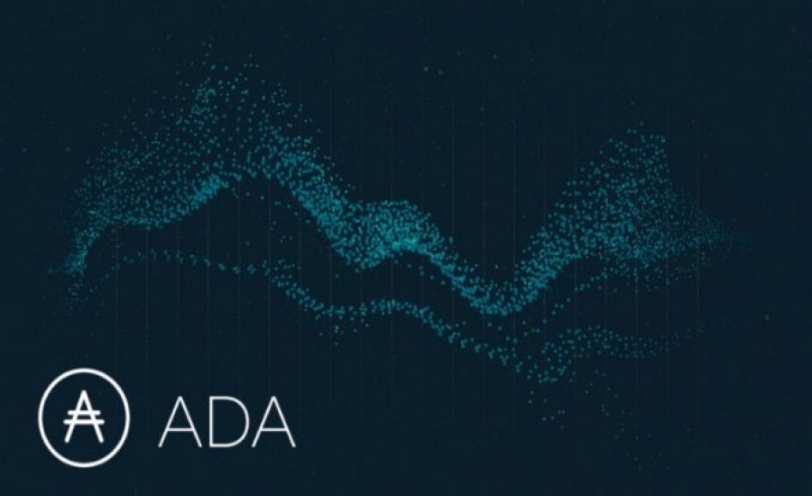 Cardano captures the exchange per day